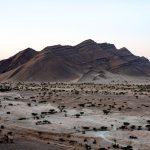 Dryland di Edouard Sepulchre | Collater.al 9e