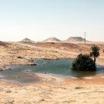 Dryland di Edouard Sepulchre | Collater.al 9i