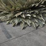 Loose-Leaf-Studio-l'installazione-botanica-in-un-ex-stazione-di-servizio-Collater.al-3