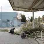Loose-Leaf-Studio-l'installazione-botanica-in-un-ex-stazione-di-servizio-Collater.al-6