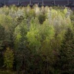 FOREST The Unending Attraction of Nature | Collater.al 4
