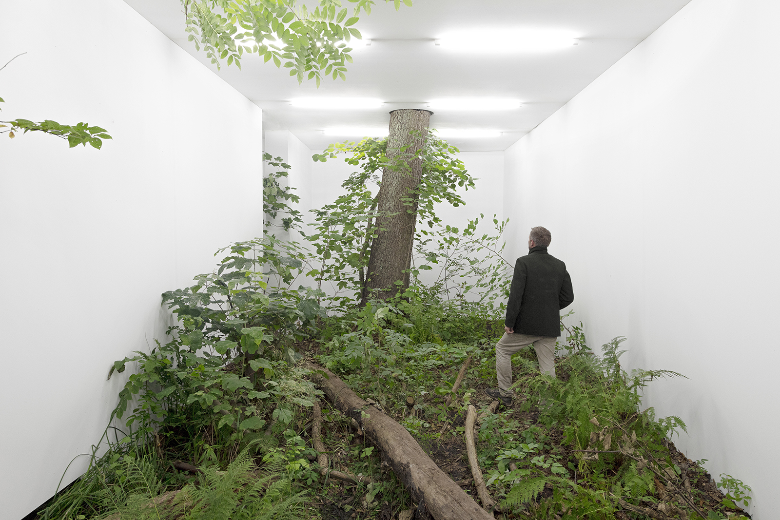 Isolation, Fabian Knecht transforms nature into an art gallery