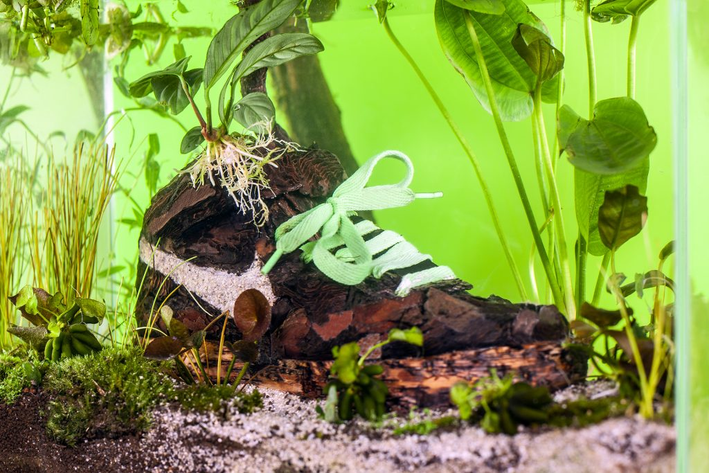 Christophe Guinet Monsieur Plant Sneakerium | Collater.al