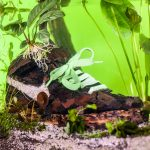 Christophe Guinet Monsieur Plant Sneakerium | Collater.al 2