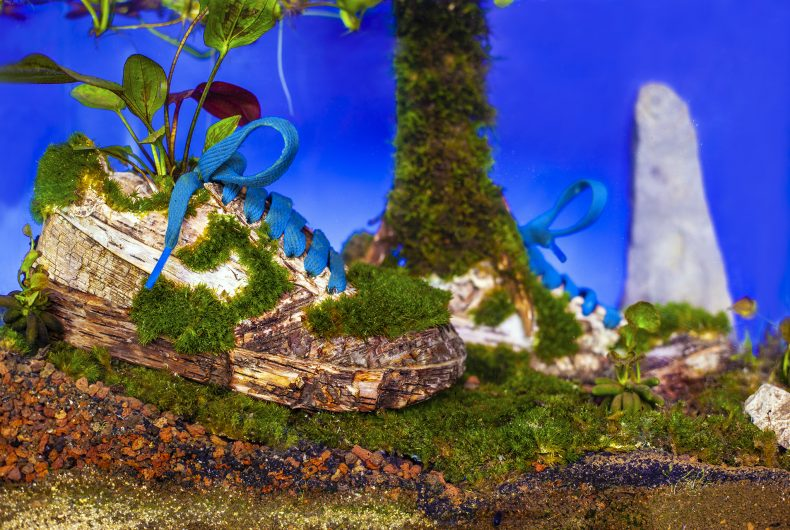 Sneakerium, Monsieur Plant trasforma sneakers in opere d'arte