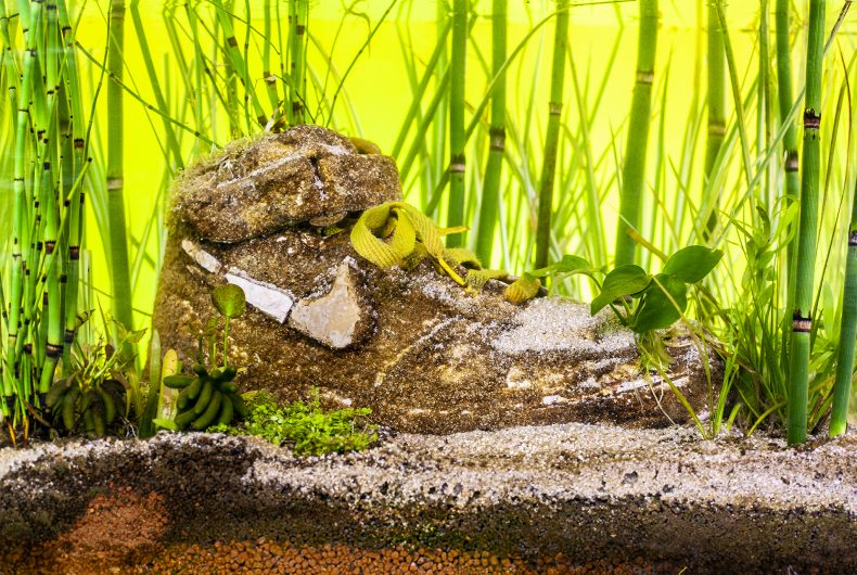 Sneakerium, Monsieur Plant transforms sneakers into works of art