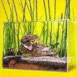 Christophe Guinet Monsieur Plant Sneakerium | Collater.al 9f