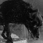 Polar Night di Mark Mahaney | Collater.al 3