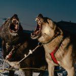 Polar Night di Mark Mahaney | Collater.al 8