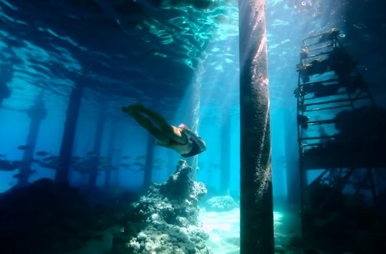 The Mermaid & the Gardener, immersi nella barriera corallina