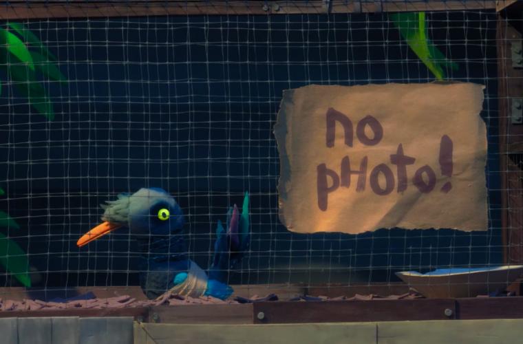 Birdlime, cosa succede quando un uccello vive in gabbia?