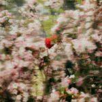 Dead Ringer la fotografia universale di Clayton Cotterell | Collater.al 5