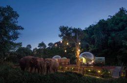 Jungle Bubbles, living in a bubble among the elephants