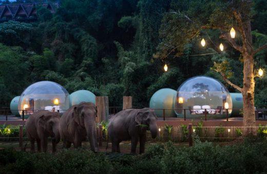 Jungle Bubbles, vivere in una bolla tra gli elefanti