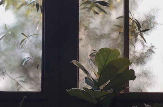 @plantsatthewindow, plants through glass