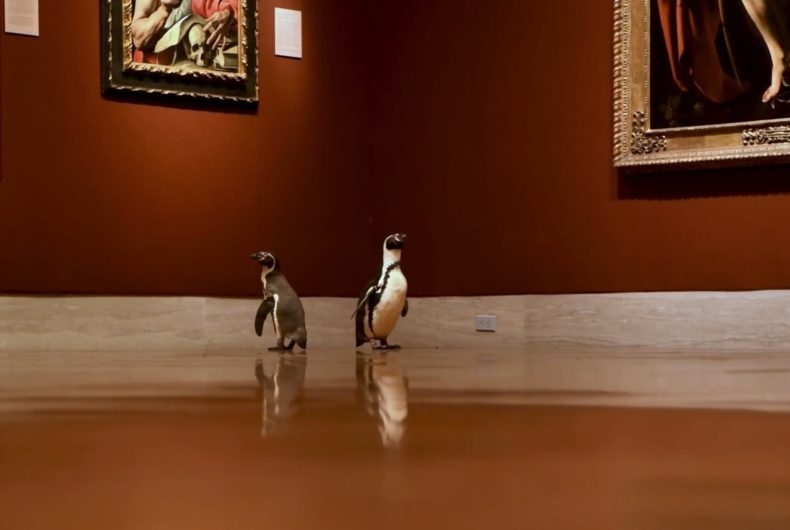 Tre pinguini in visita al Museo Nelson-Atkins di Kansas City