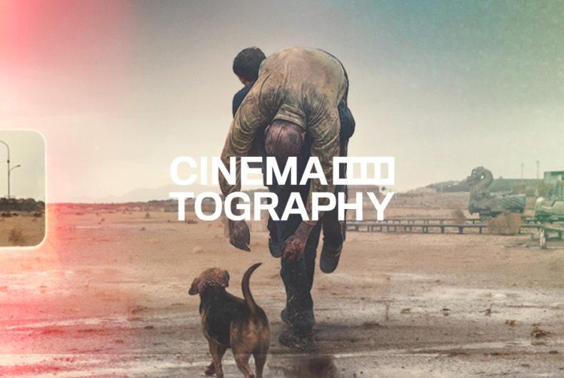 Cinematography – Dogman