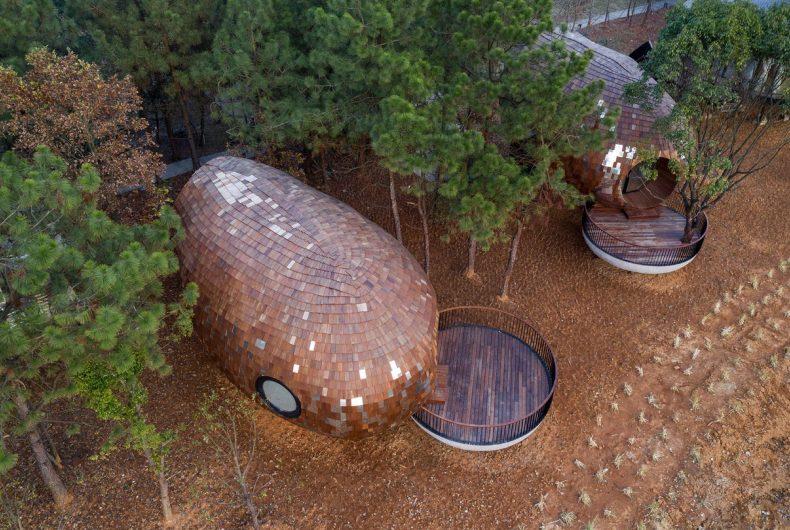 The Seeds, cabine a forma di seme immerse nella foresta