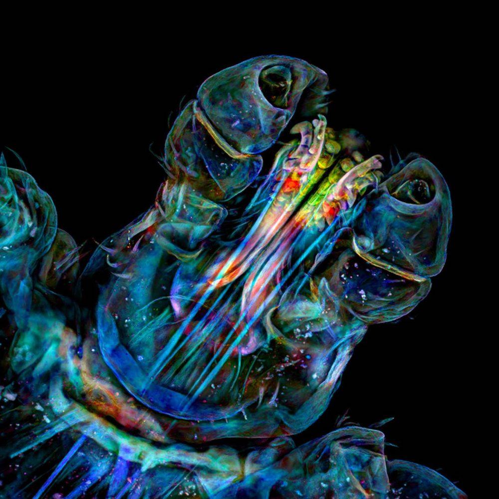 Fotografia microscopica | Collater.al