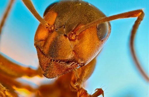 Le migliori foto al microscopio del 2021 secondo Nikon