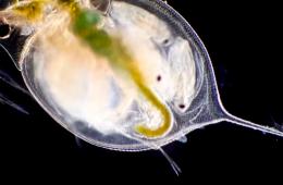 I migliori video a microscopio del 2021 secondo Nikon