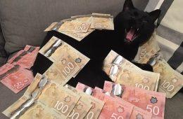 All for the gram – Cashcats