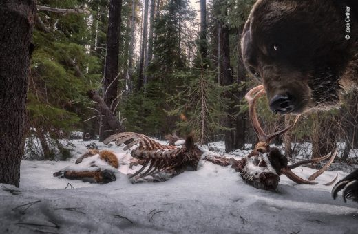 The world's best nature photography of 2021
